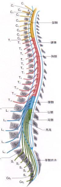 spine01_05.jpg